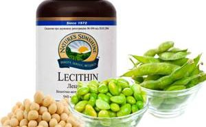 Польза и возможный вред лецитина