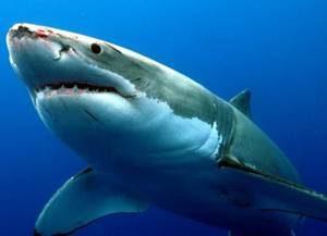Отзывы потребителей об эффективности кремов и масок с акульим жиром для суставов