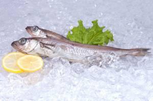 Полезные свойства и противопоказания рыбы путассу