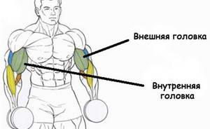 Какие упражнения являются самыми эффективными на бицепс