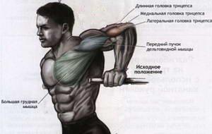 Какие мышцы задействованы при выполнении самого лучшего упражнения на трицепсы на брусьях
