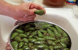 Рецепт приготовления варенья из сосновых шишек в домашних условиях