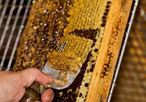 Что такое пчелиный забрус, как этот продукт применяется для похудения