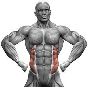 Как быстро и эффективно накачать косые мышцы пресса