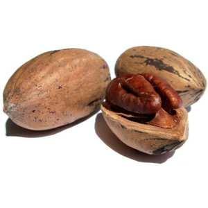 Полезные и лечебные свойства и противопоказания ореха пекан