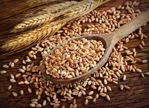 Полезные свойства и калорийность полбы