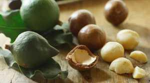 Полезные свойства и противопоказания масла макадамии (австралийского ореха)
