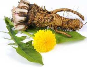 Применение листьев, корня и цветков одуванчика для похудения