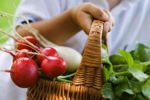Как следует выбирать редис для салата из рески с яйцом и огурцом