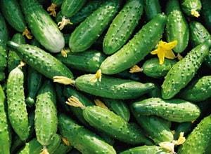 Какие огурцы лучше использовать в приготовлении салата с кальмарами, яйцами и огурцом