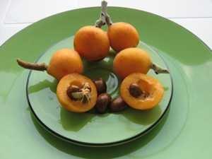 Что такое мушмула, как едят этот фрукт (с кожурой или без) и на что он похож на вкус
