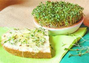 Полезные, лечебные свойства и противопоказания к применению кресс-салата (клоповника)
