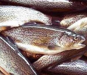 речная рыба в фольге духовке рецепты с фото