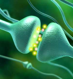 В каких продуктах питания содержится много гормона счастья - серотонина