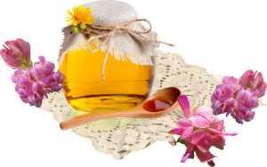 Калорийность и полезные свойства меда из эспарцета