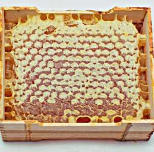 Польза и вред меда в сотах для здоровья организма человека