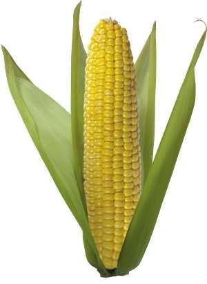 Химический состав, пищевая (БЖУ) и энергетическая (калорийность) ценность кукурузы