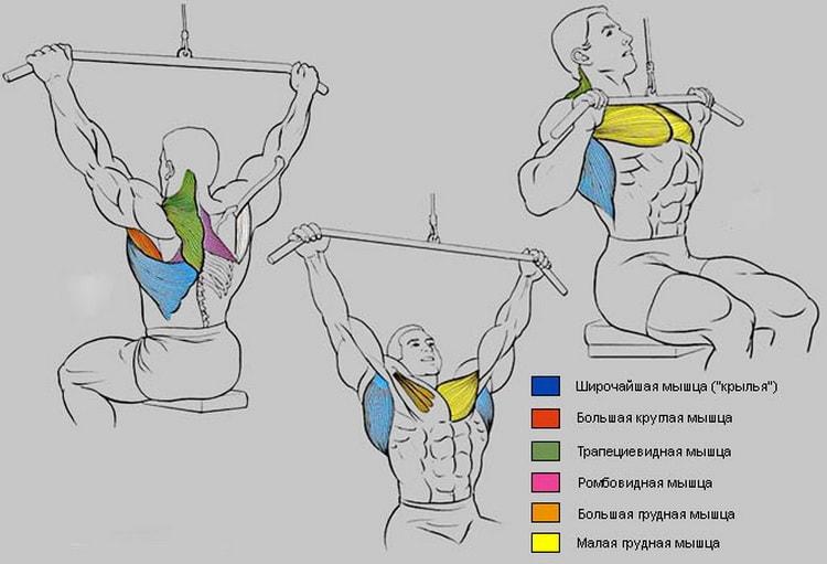 мышцы которые работают в тяге верхнего блока к груди