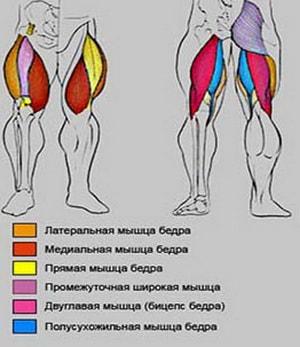работа мышц при приседании со штангой