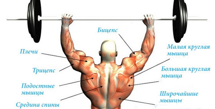 мышцы работающие при армейском жиме
