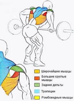 мышцы которые работают при тяге штанги