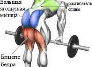 работающие мышцы при становой тяге
