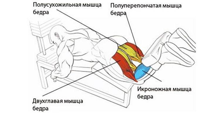 мышцы которые работают в упражнении