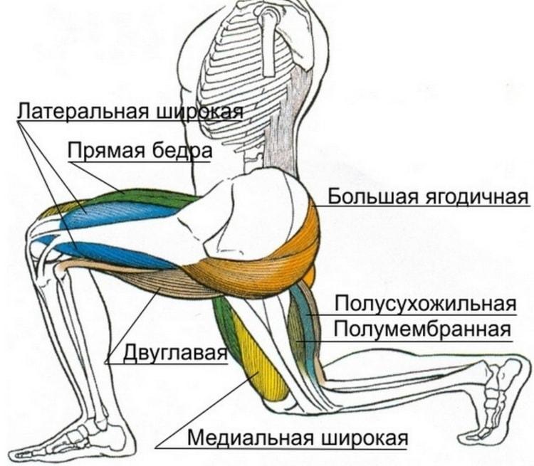 мышцы которые работают при выпадах