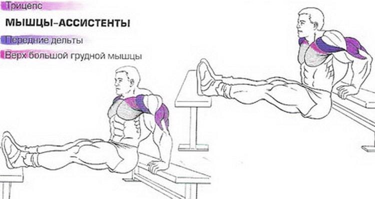 анатомия обратных отжиманий