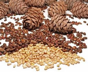 кедровые орехи калорийность