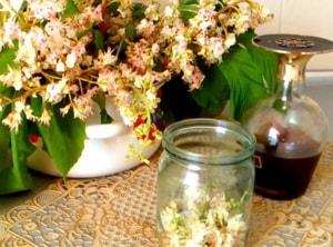 настойка из цветов конского каштана