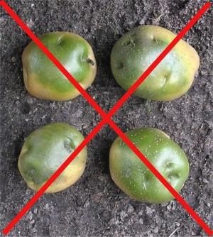 какой картофель не стоит употреблять в еду