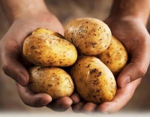 Лечебные и полезные особенности картофеля
