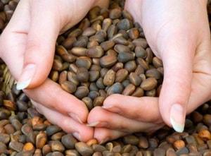 Настойка на кедровых орешках в диетологии