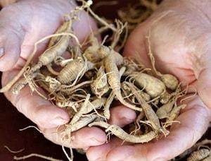 Применениенастойки корня женьшеня