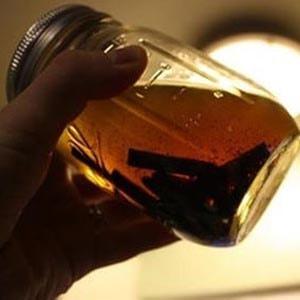 золотой ус настойка на водке применение