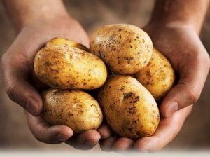 выбирайте для блюда спелый картофель
